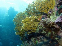 The best scuba-diving spots in Cuba