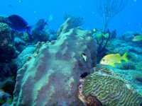 Visitors guide to the wonders of Cayo las lguanas