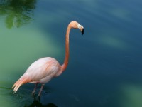 Flamingo at Havana National Zoo Barbara Walsh Photography/Flickr